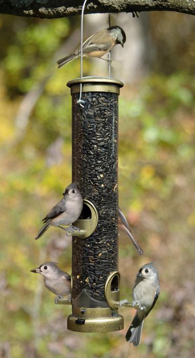 Aspects Antique Brass Medium Seed Tube Bird Feeder w/ Quick Clean Base