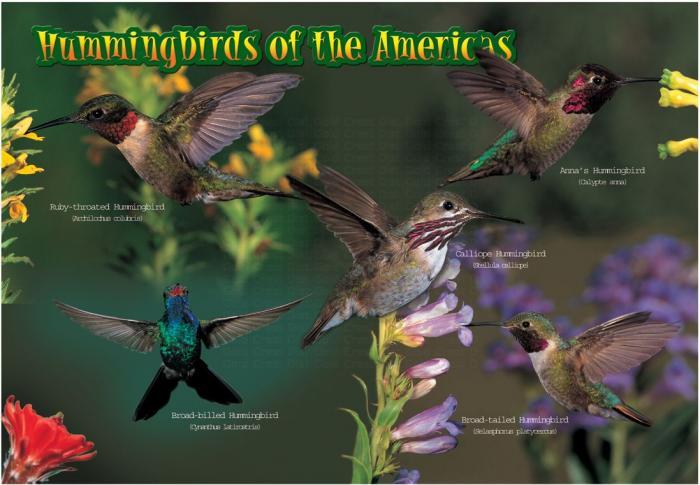 Impact Photographics Kids Puzzle Hummingbirds