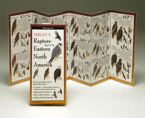 Steven M. Lewers & Associates Sibley's Raptors Eastern North America