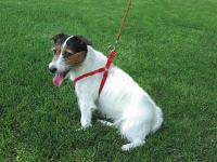 "Coastal Pet Products 6445 Comfort Wrap Adjustable Nylon Harness - 5/8"", Red"
