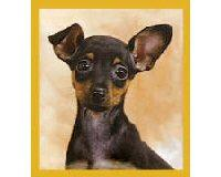 Magnetic Bookmark Chihuahua Puppy