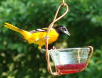 Songbird Essentials Single Jelly Cup Oriole Bird Feeder
