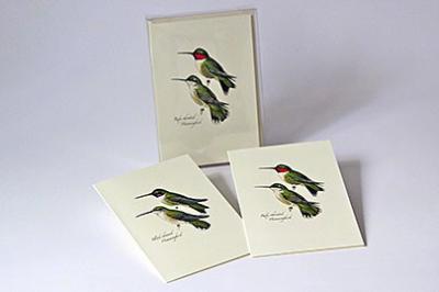 Steven M. Lewers & Associates Peterson's Hummingbird Notecard Assortment (4 each of 2 styles)
