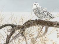 Outset Media Games Fallen Willow Snowy Owl 500 pcs