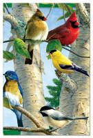 Tree Free Greetings Favorite Songbirds Eco Notes