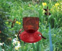 Songbird Essentials Dr. JB Switchable 48 Ounce Hummingbird Bird Feeder