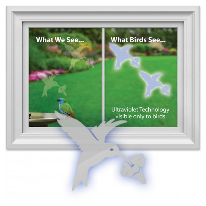 Window Alert Hummingbird Decal