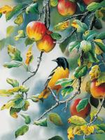 Outset Media Games Northern Oriole 500 piece Puzzle