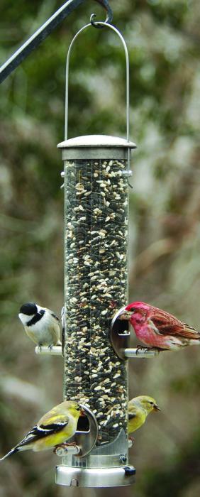 Aspects Brushed Nickel Medium Seed Tube Bird Feeder w/ Quick Clean Base