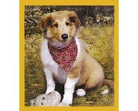 Magnetic Bookmark Collie Puppy
