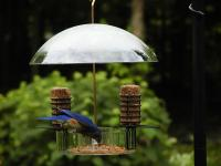 Birds Choice Supper Dome Seed, Suet, and Mealworm Bird Feeder