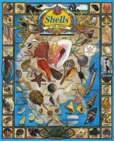 White Mountain Shells of Our Shores Puzzle