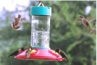 Songbird Essentials Original Dr. JB's 16 Ounce Clean Hummingbird Bird Feeder