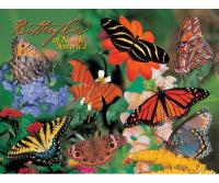 Impact Photographics Puzzle Butterflies