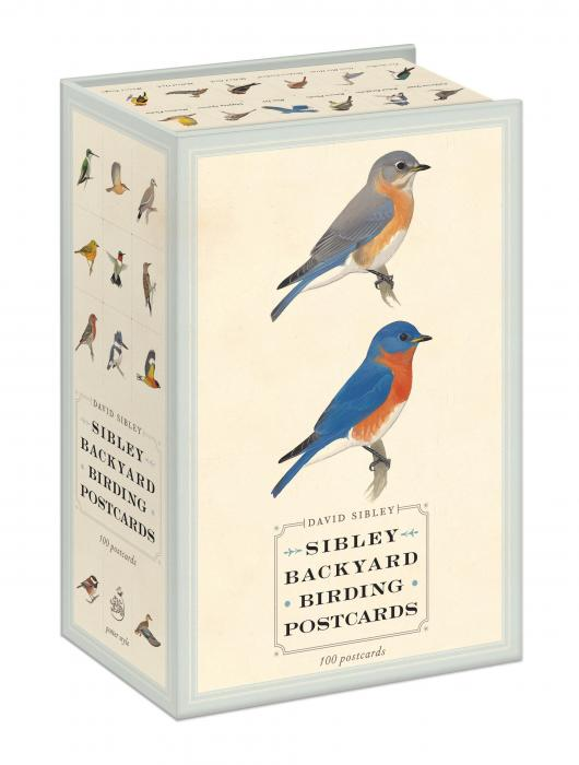Random House Sibley Backyard Birding Postcards (100 postcards)
