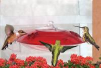 Droll Yankees Window Hummingbird Bird Feeder