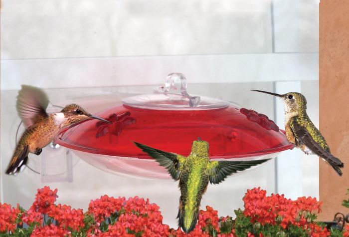 Droll Yankees Window Hummingbird Bird Feeder
