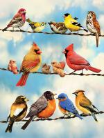 Outset Media Games Birds on a Wire 500 pcs
