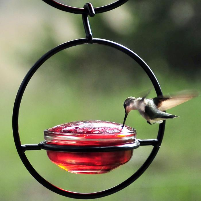 Couronne Company Sphere Hummingbird Bird Feeder