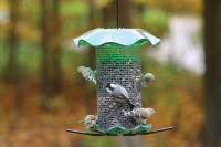 Birds Choice 3 Quart Forever Bird Feeder - Green