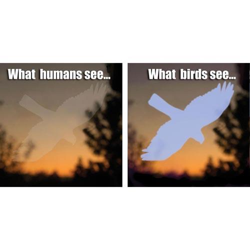 Songbird Essentials Window Hawk Transparent
