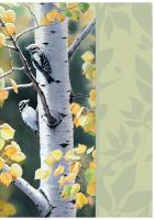 Tree Free Greetings Birch Conversation Blank