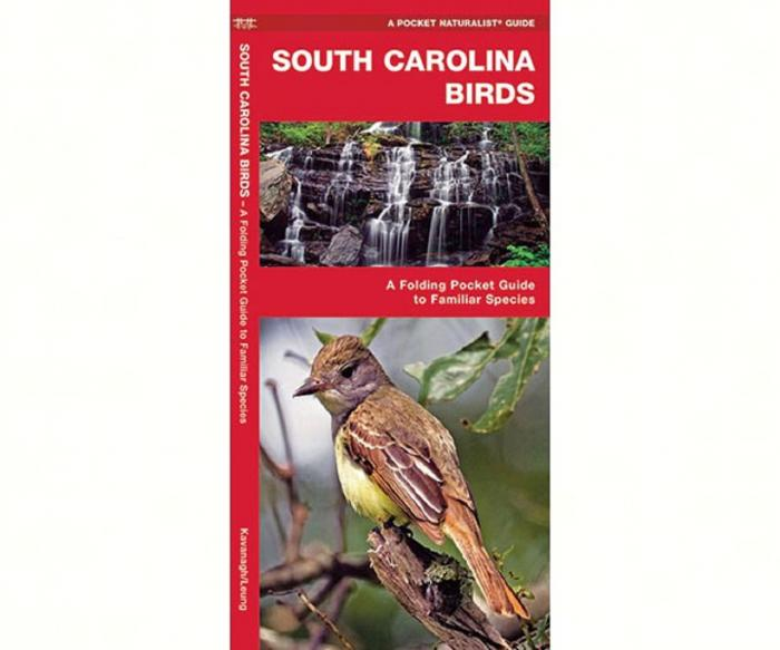 Waterford South Carolina Birds