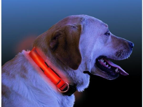 Nite-ize Nite Dawg LED Light Up Dog Collar - Orange, Small