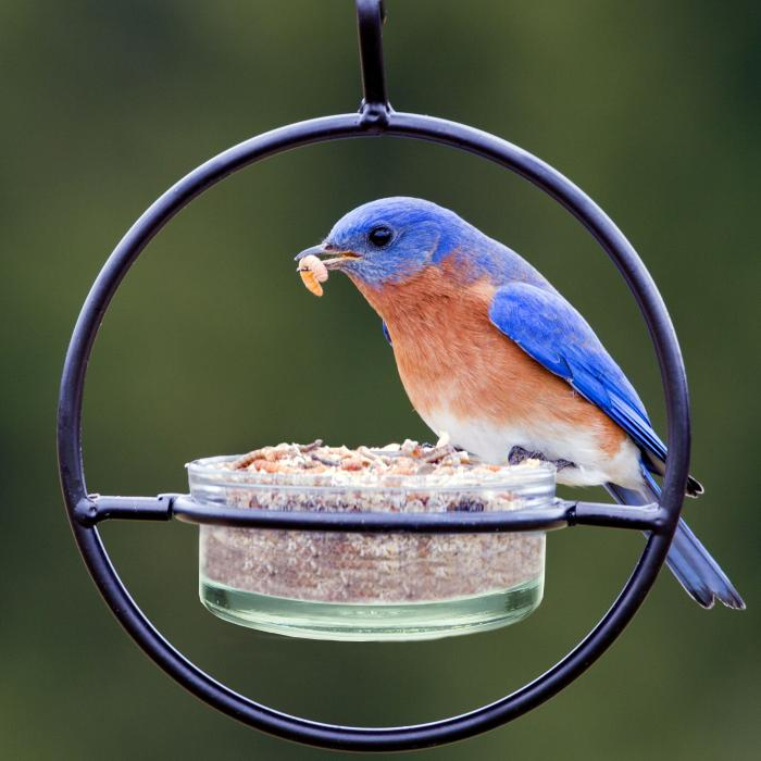 Couronne Company Clear Sphere Hanger Bird Feeder