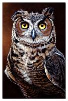 Tree Free Greetings Great Horned Owl Eco Notes