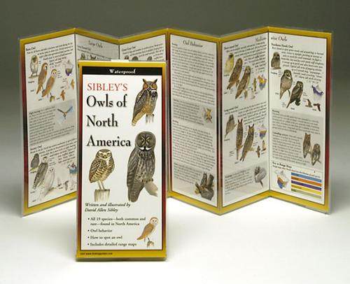 Steven M. Lewers & Associates Sibley's Owls North America