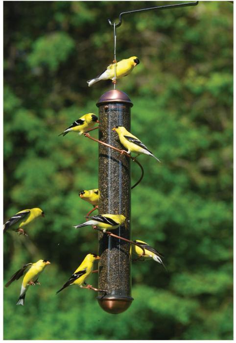"""Songbird Essentials 17"""" Copper Spiral Thistle Tube Bird Feeder"""