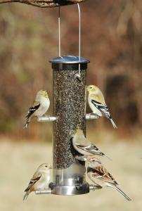 Tube / Finch Feeders by Aspects