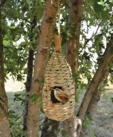 Songbird Essentials Hanging Grass Roosting Pocket Teardrop
