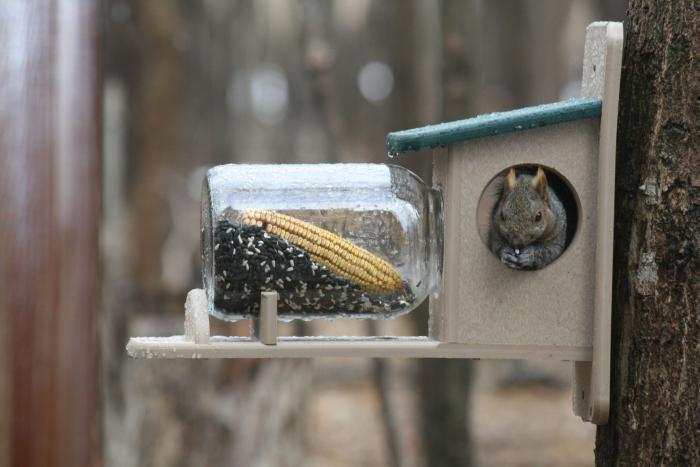 Birds Choice Recycled Squirrel Jar Feeder