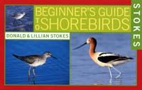 Beginner's Guide to Shorebirds