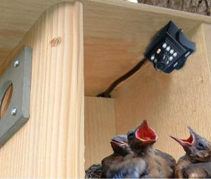 Bird House Accessories by Birdhouse Spy Cam