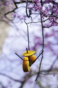 Bird House/Bird Feeder Kits by Panacea