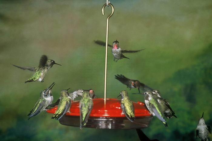 Aspects Hummzinger Excel 16 Ounce Hummingbird Bird Feeder