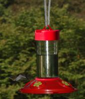 Songbird Essentials Dr. JB's 16 Ounce Clean Hummingbird Bird Feeder