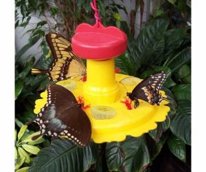 Butterfly Gardens by Songbird Essentials