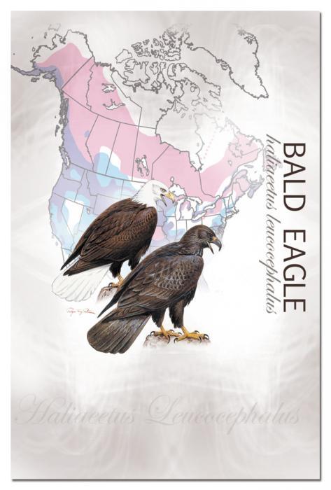 Tree Free Greetings Bald Eagle Eco Notes