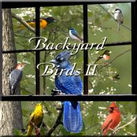 Naturescapes Music Backyard Birds II