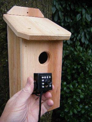 HD Northwoods Cedar Hawk Eye Birdhouse