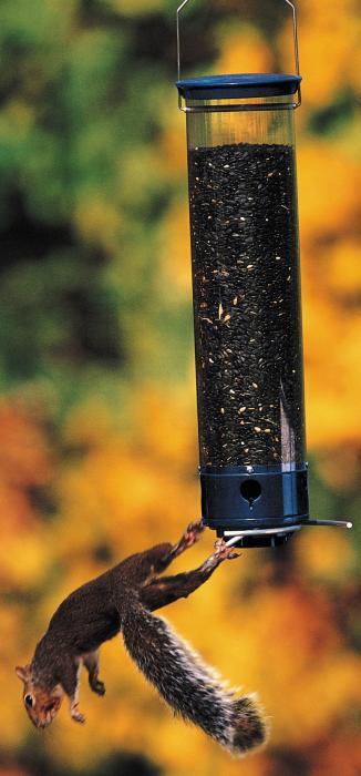 Droll Yankees Yankee Whipper Squirrel Proof Bird Feeder