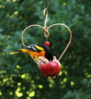 Songbird Essentials Love Birds Fruit Oriole Bird Feeder
