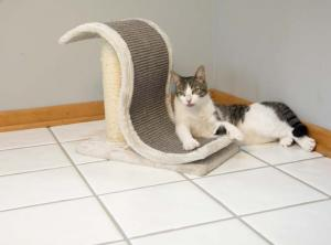 Scratching Posts by Iconic Pet