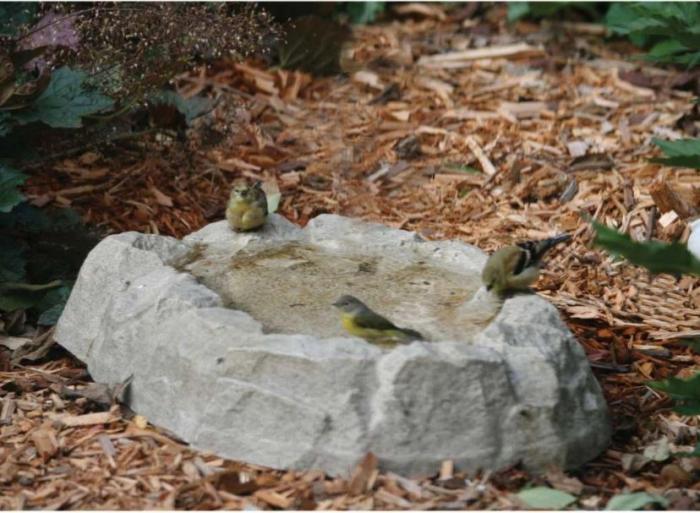 Birds Choice Rocky Mountain Ground Bird Bath