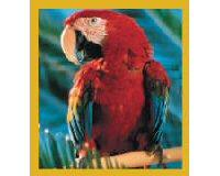 Magnetic Bookmark Macaw Red Scarlet Macaw