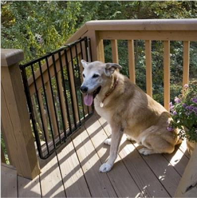 Stairway Special Outdoor Pet Gate - Black